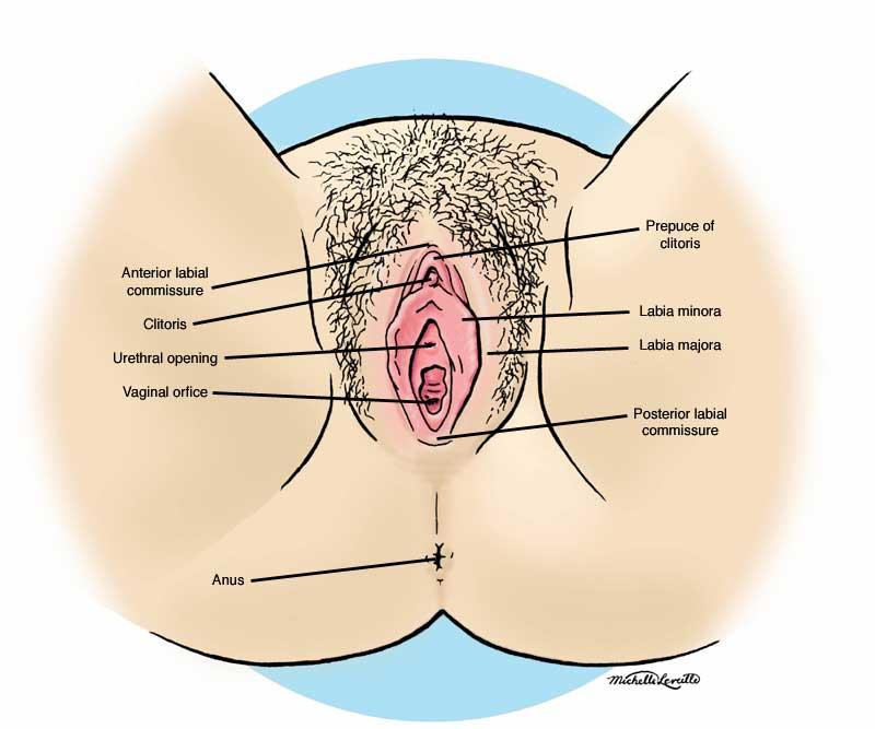 France anatomy of the female orgasim loves cum